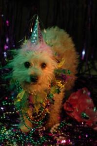 Mardi Gras Frankie by Amy Haskell