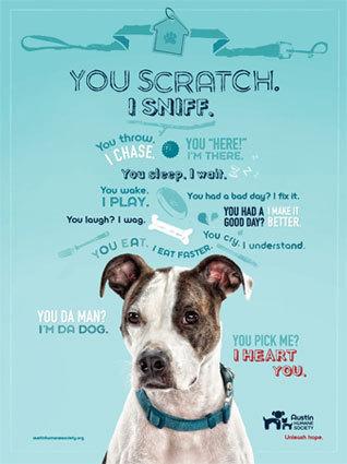 Service Dog Adoption Austin