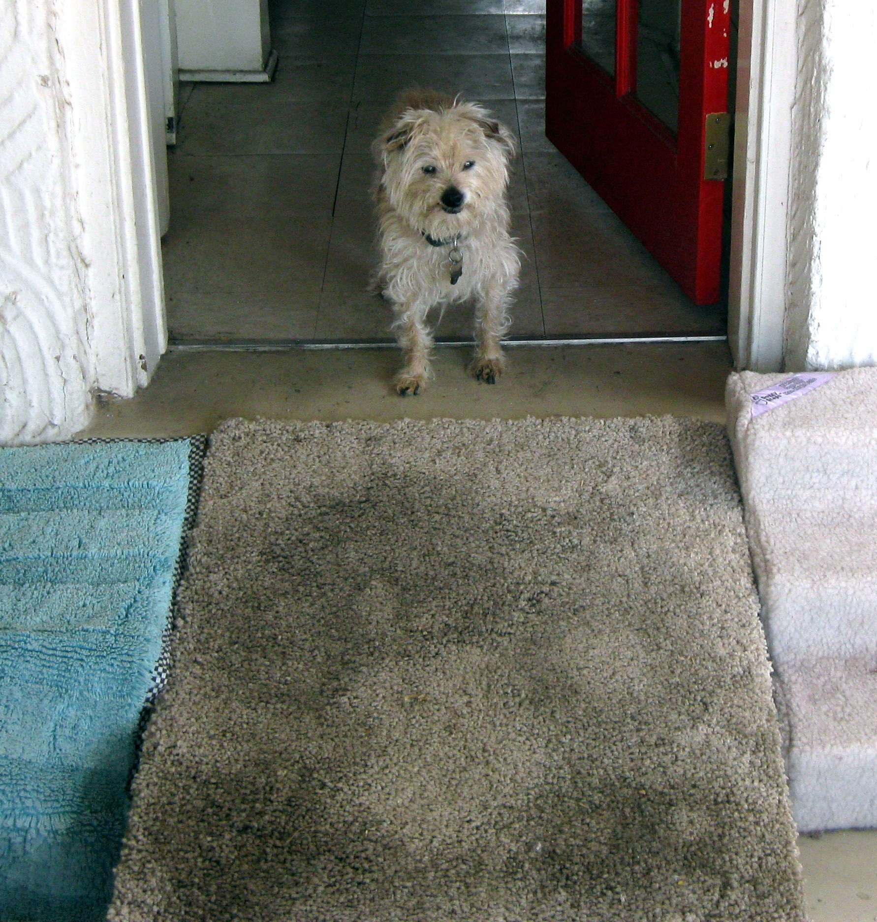 My Dog Peed On My New Rug: The Frankie Diaries, 9/18: The Physics Of Dog Pee