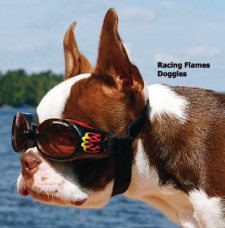 A cool Doggles doggie