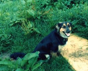 Trixie, who never heard of Wyatt Earp or his dog