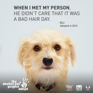 Shelter Pet Project 2014