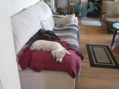 Resting on the armrest