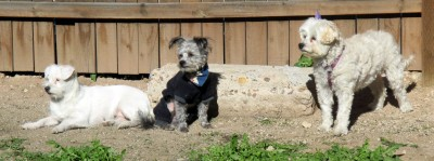 Dogs in the yard 2